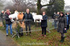 Nieuwe schapen voor de kerststal in Berg en Dal