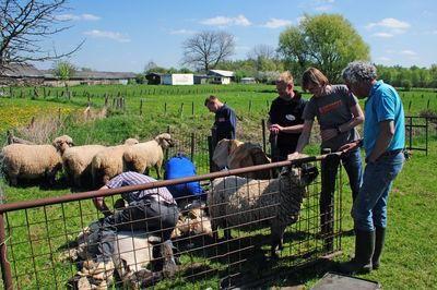 DSC_6290_schapen