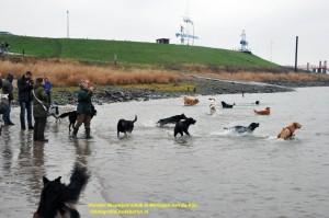 DSC_8869 honden naam